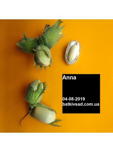 Живці фундука Анна