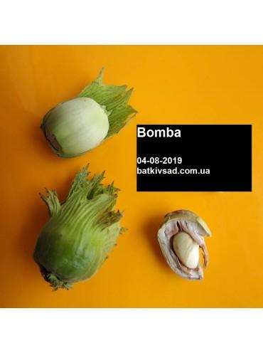 фундук Bomba